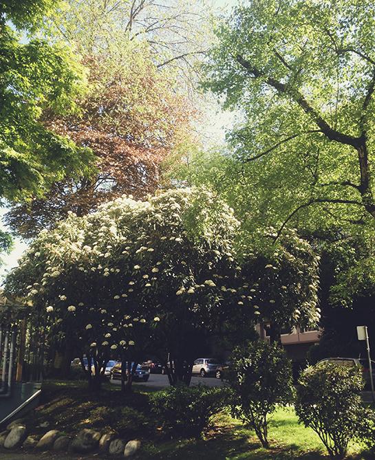 angela-peaceful-yard